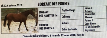 NOUVELLE ARRIVEE BOREALE DES FORETS