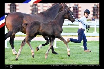 Championnat de France foals