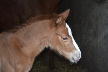 1ère naissance 2019 à l'élevage des loges